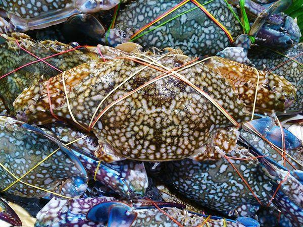 Blue Crab Market Tie Plastic Band Animal