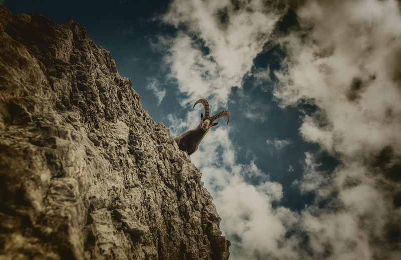 Low angle view of mountain goat on rock formation against cloudy sky