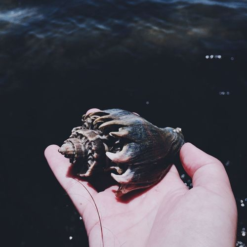 Beach Shells Water Beauty