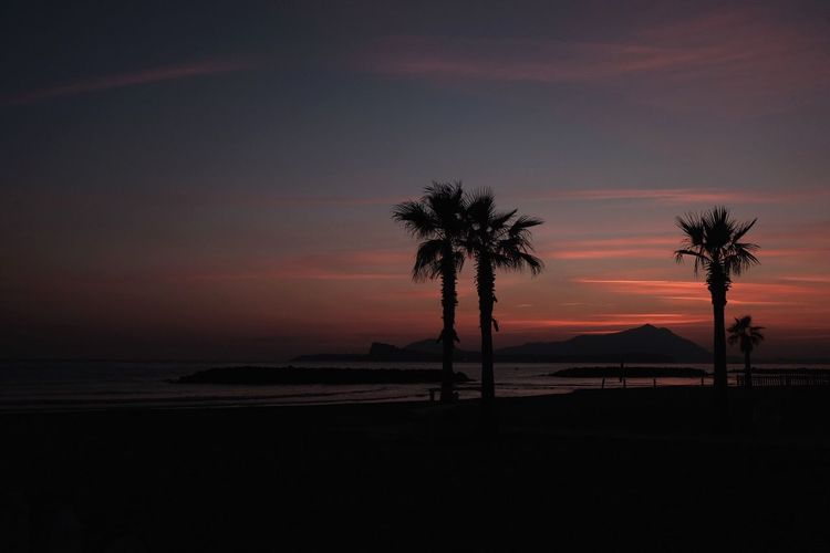 Silhouette Palm Trees On Beach Against Sky At Sunset