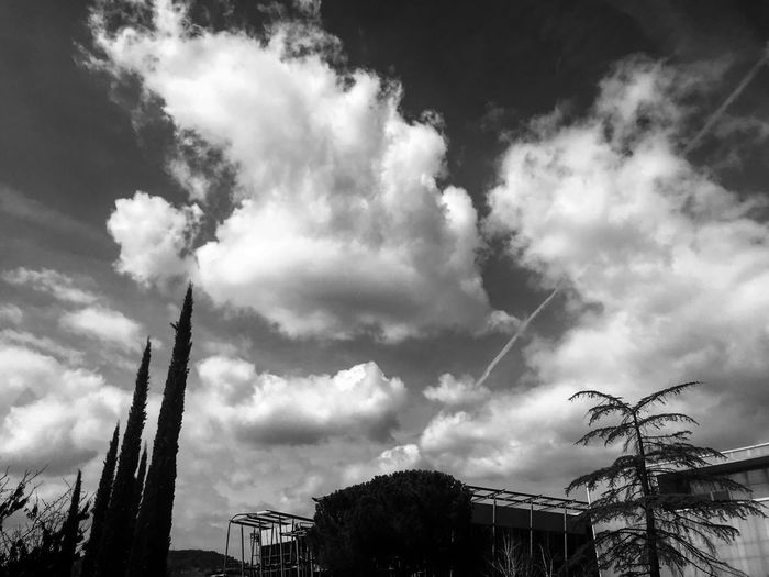 Igersbnw Volgobiancoenero BW_photography Bnw_captures Bnw_collection Sky Low Angle View Cloud - Sky Tree Built Structure Architecture Outdoors Nature No People
