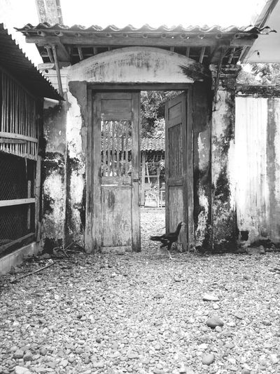 Black & White Gates Gateaway Runaway Oldgate Open Edit Photos Around You