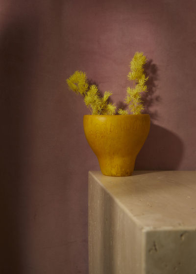 Close-up of yellow potted plant against wall