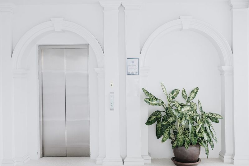 Potted plant on door of building