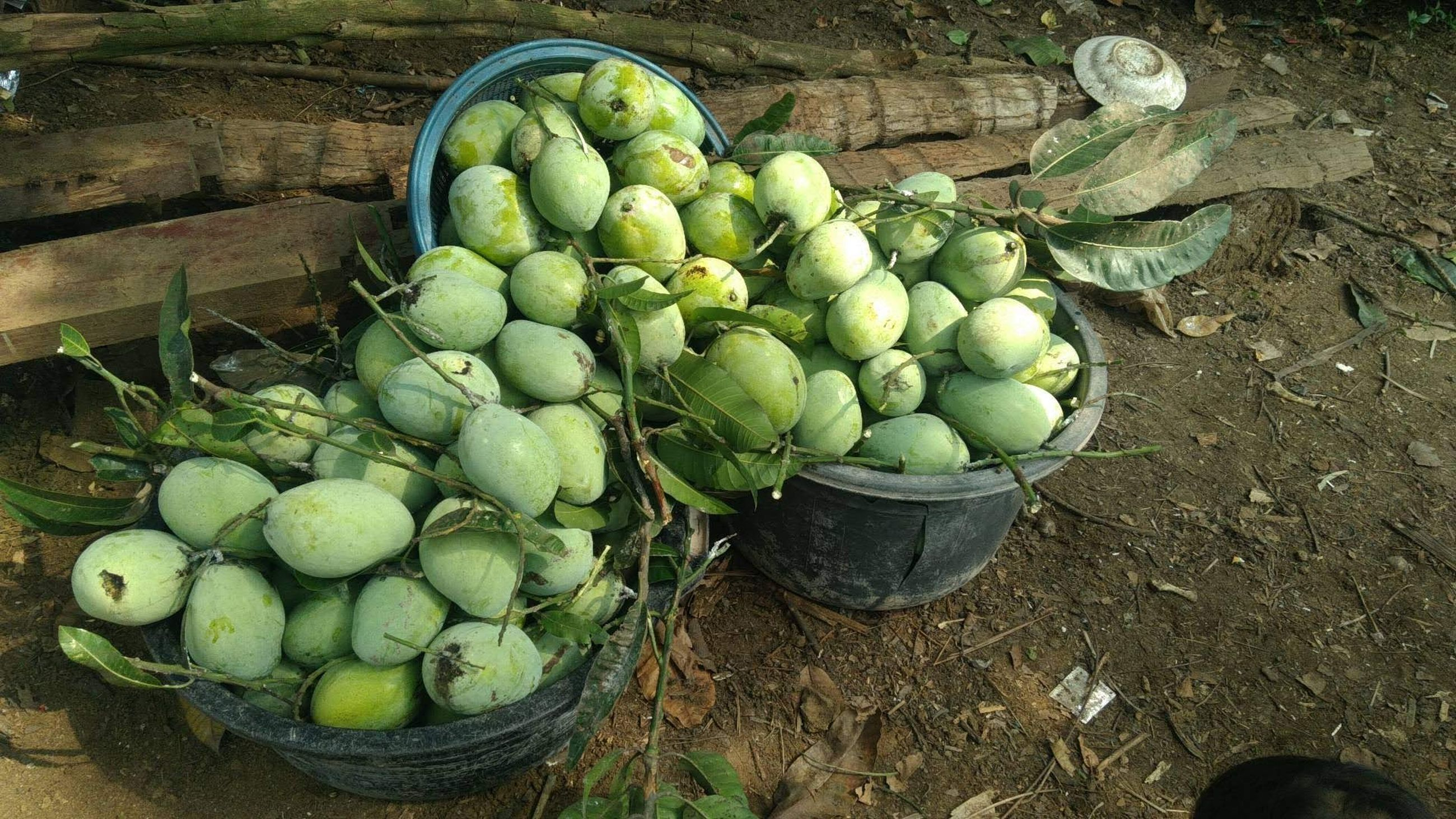food, food and drink, healthy eating, freshness, wellbeing, fruit, green, high angle view, container, plant, basket, produce, day, no people, abundance, large group of objects, nature, gourd, vegetable, outdoors, for sale, land, agriculture, organic