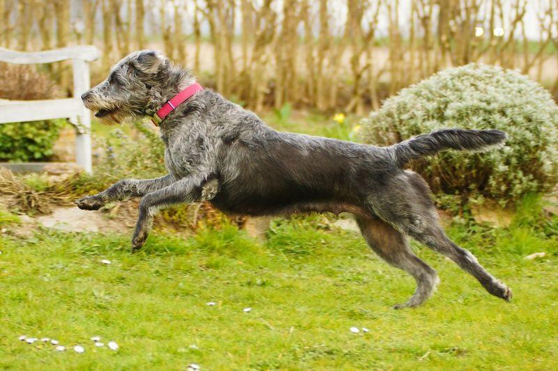 🐕💨 Dog Run Power Fast Pet Photography Run Dog Run Go Go Go