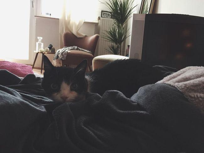 Peppels Katze Modelt auf der Kuscheldecke