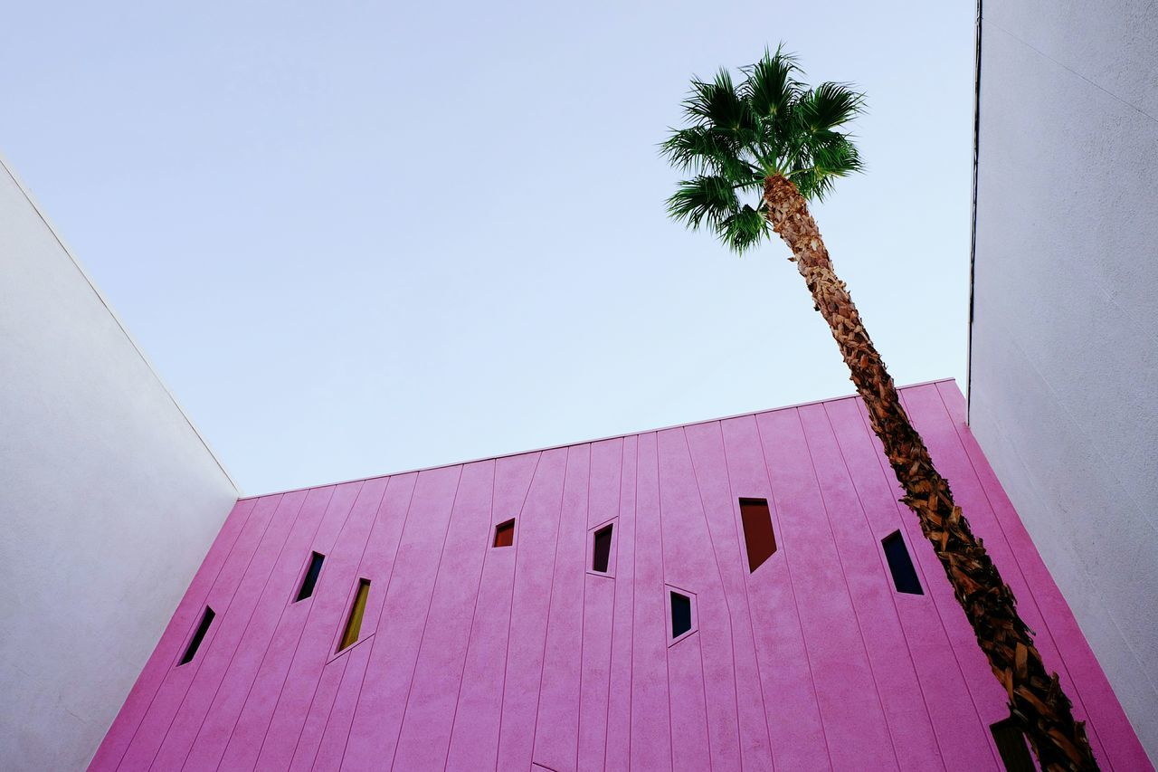 LOW ANGLE VIEW OF BUILDING WITH PALM TREE AGAINST SKY