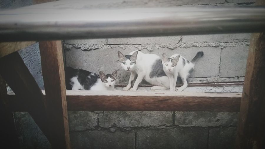 Cats Mother Cat Pets Pet White And Black Cat Stray Cats Family Cat