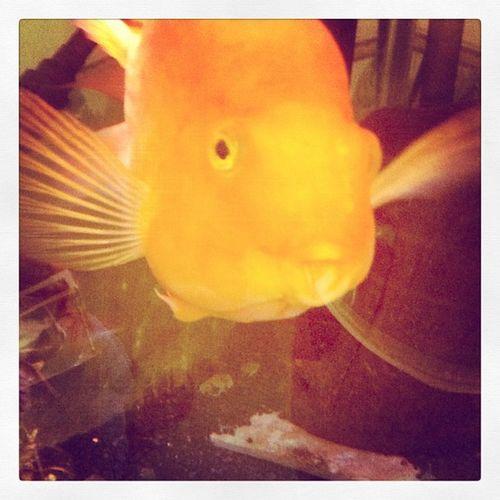 Happylittlefish Friendlyfish
