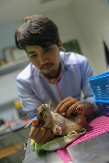 Male veterinarian examining rodent on table in hospital