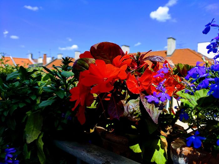 Flower Cloud -