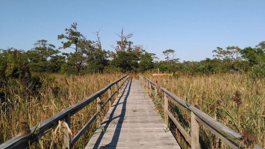 Bridge Day Forest Landscape Marsh Nature No People Tree