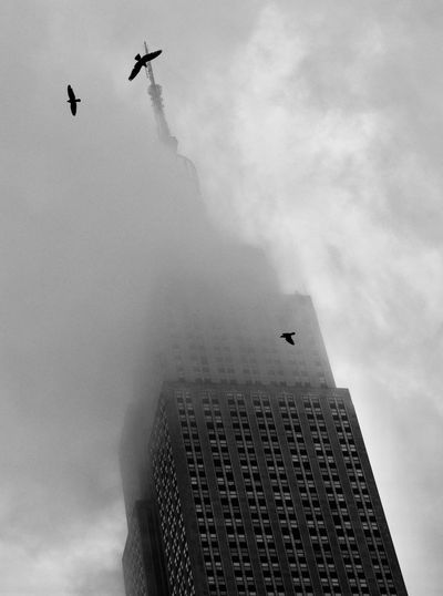 Fog Birds Of