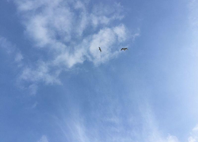 Two Birds Birds Flying High In The Sky Blue Skies Whispy Clouds Looking Up Birds Eye View Friends Playing Birds Flying High Hovering Birds Bird Wings Wings Blue Wave