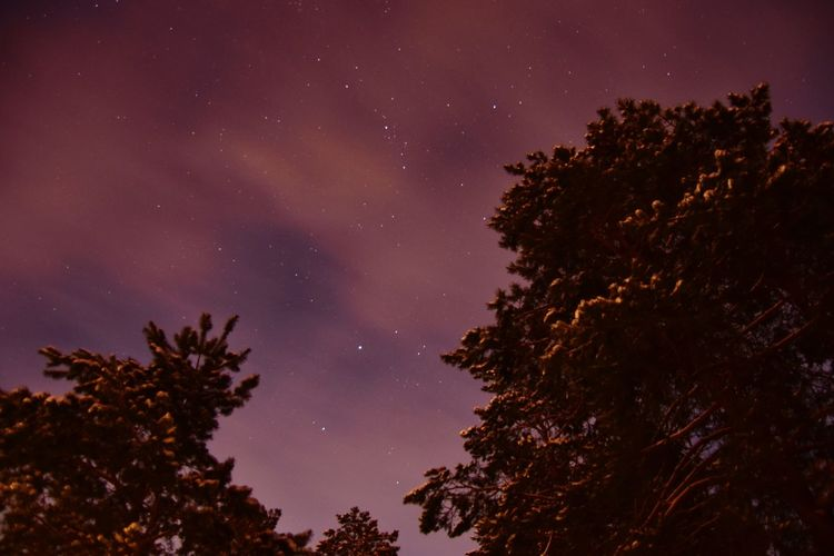 starry winter night over the woods Star Night Evening Forest Astronomy Galaxy Space Tree Milky Way Star - Space Constellation Space And Astronomy Silhouette Sky Sky Only Pine Woodland Pine Tree Evergreen Tree Pine Wood Eastern Europe Pinaceae