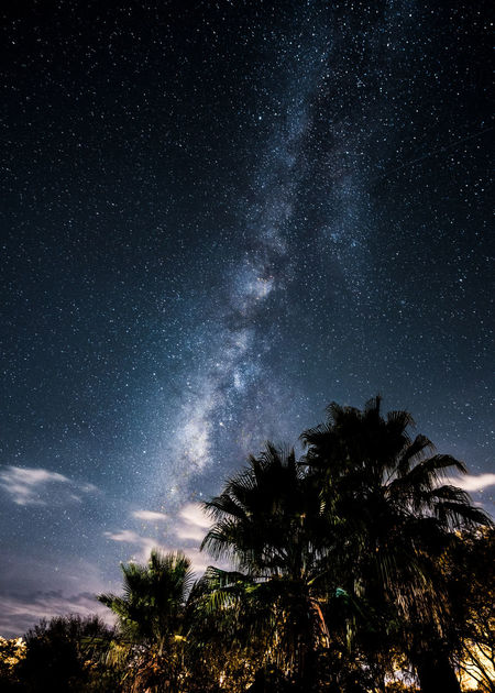Astronomy Beauty In Nature Long Exposure Milky Way Nature Night No People Outdoors Palm Tree Scenics Sky Star - Space Tree
