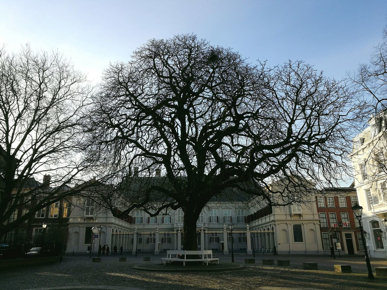 architecture, building exterior, built structure, bare tree, tree, house, outdoors, sky, no people, city, day, clear sky, branch
