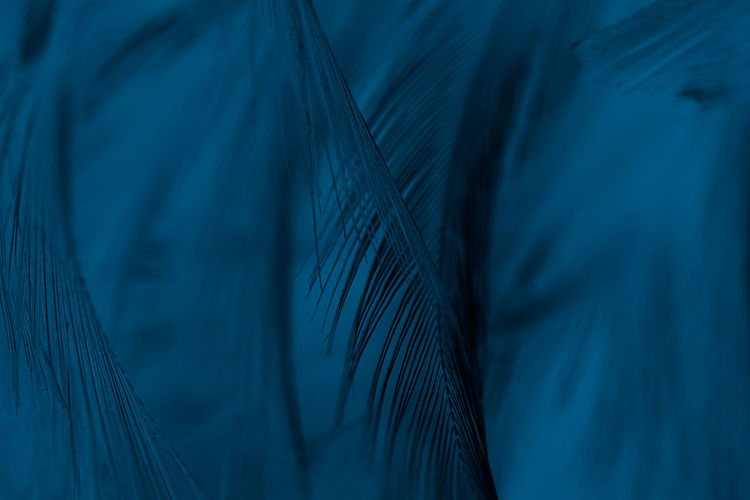 Close up dark blue color feather pattern texture background Abstract Backgrounds Blue Close-up Feather  Full Frame Indoors  Lightweight Nature No People Pattern Selective Focus Simplicity Softness Textile Textile Industry Textured  Unity