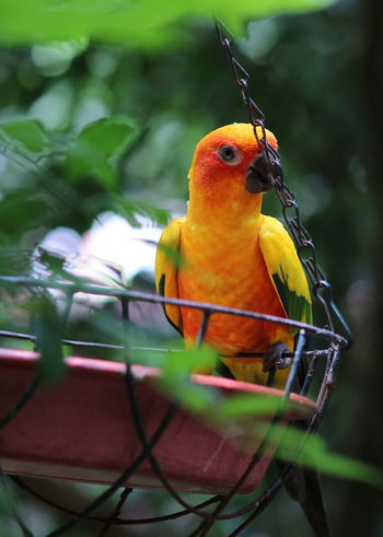 Animal Wildlife Bird Parrot One Animal Multi Colored Nature Beauty In Nature No People