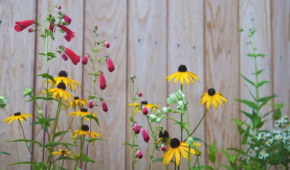 Flowers climbing upwards Beauty In Nature Blossom Colorful Flower Flower Head Freshness Garden Garden Photography Green Growing Growth Multi Colored Nature Petal Pink Color Plant Springtime Stem Summer Vibrant Color Yellow Yellow Color Yellow Flower