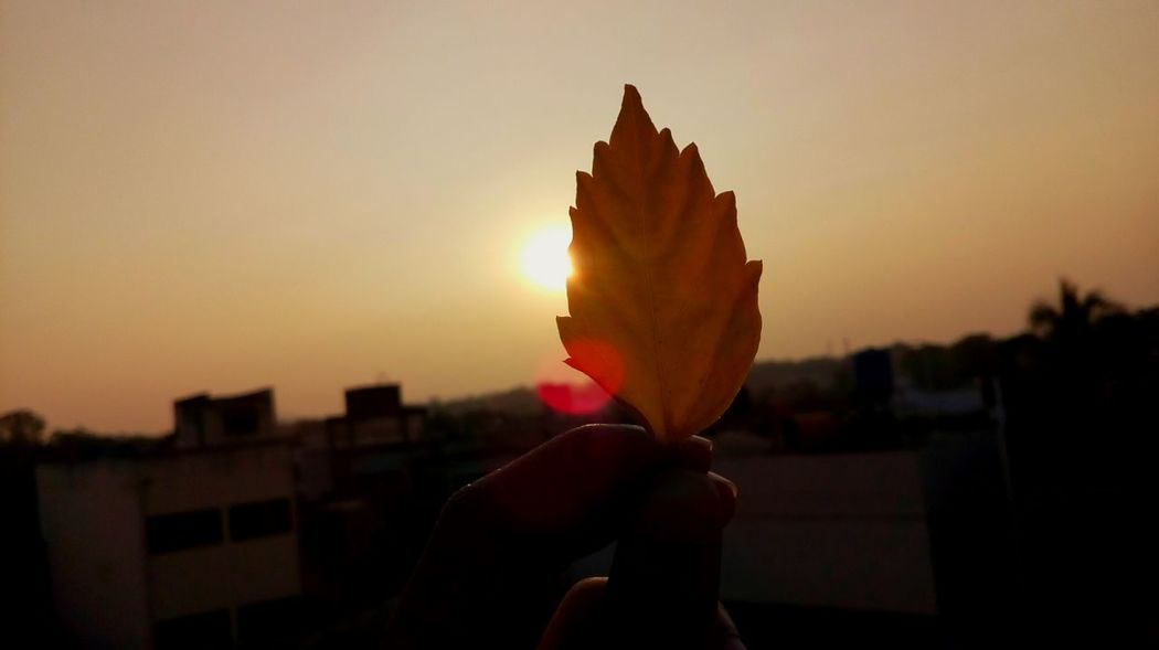 Sunset Beginner Leaf Beginnerphotographer Leisure Activity Power In Nature MotoClick Backgrounds Mobilephotography Green Color Beauty In Nature Freshness Flower Flower Head Petal Clear Sky Plant Growth Tree Nature