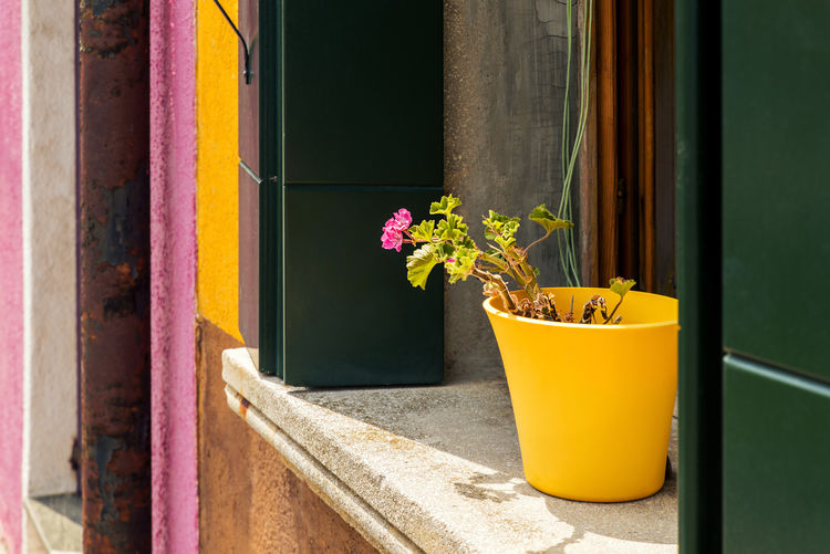 Beautiful pink flowers in yellow vase on windowsill in Burano, Italy Burano, Italy Burano, Venice Green Color Nature Plant Travel Beauty In Nature Burano Burano Island Colorful Flower Flower Pot No People Outdoors Pink Color Plant Potted Plant Travel Destinations Window Window Frame Window Shutter Window Sill Yellow Color