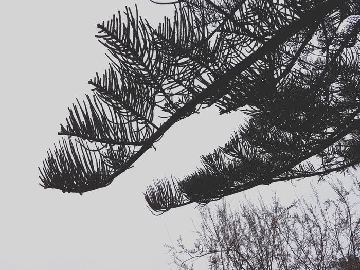 Cold, cozy and moody Nature Weather RainyDay Winter Beauty In Nature Season  Still Life Tranquility Mindfulness Calm Tree Silhouette Grey Sky Tree Branch Bird Silhouette Sky Cold Temperature Cold