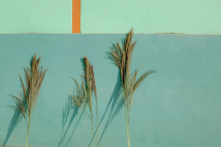 Green. Plants. https://www.instagram.com/nic.miles/ Green LINE Lines Orange Abstract Architecture Green Color Growth Outdoors Plant Shadow Summer Turquoise Colored Wall The Week On EyeEm Editor's Picks