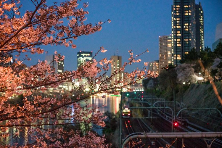 飯田橋 Architecture Built Structure City Life Cityscape Hanami Illuminated Night No People Outdoors Pink Sakura 2017 Springtime Tokyo,Japan Transportation