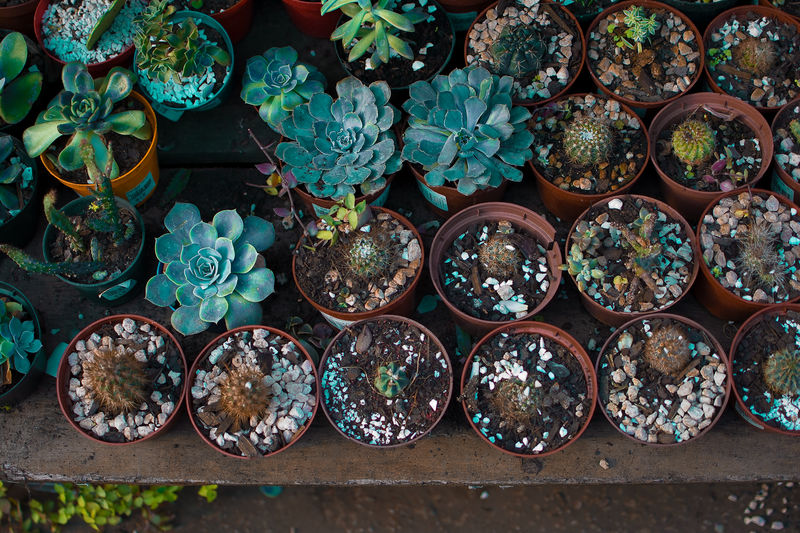 EyeEm EyeEm Best Shots EyeEm Selects Abundance Arrangement Choice Day Directly Above For Sale Green Color Growth High Angle View Large Group Of Objects Leaf Nature No People Order Plant Plant Nursery Plant Part Potted Plant Side By Side Still Life Succulent Plant Variation