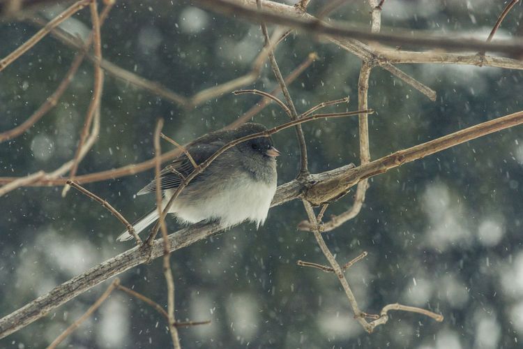 Animal Themes Animal Wildlife Animals In The Wild Beauty In Nature Bird Branch Close-up Cold Temperature Day Focus On Foreground Nature No People One Animal Outdoors Perching Snow Snowing Sparrow Tree Water Weather Wet Winter