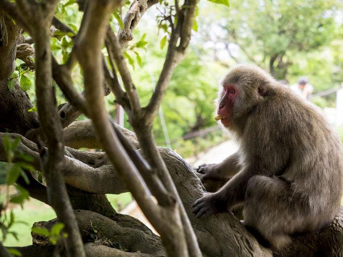 """""""I'm a monkey"""""""