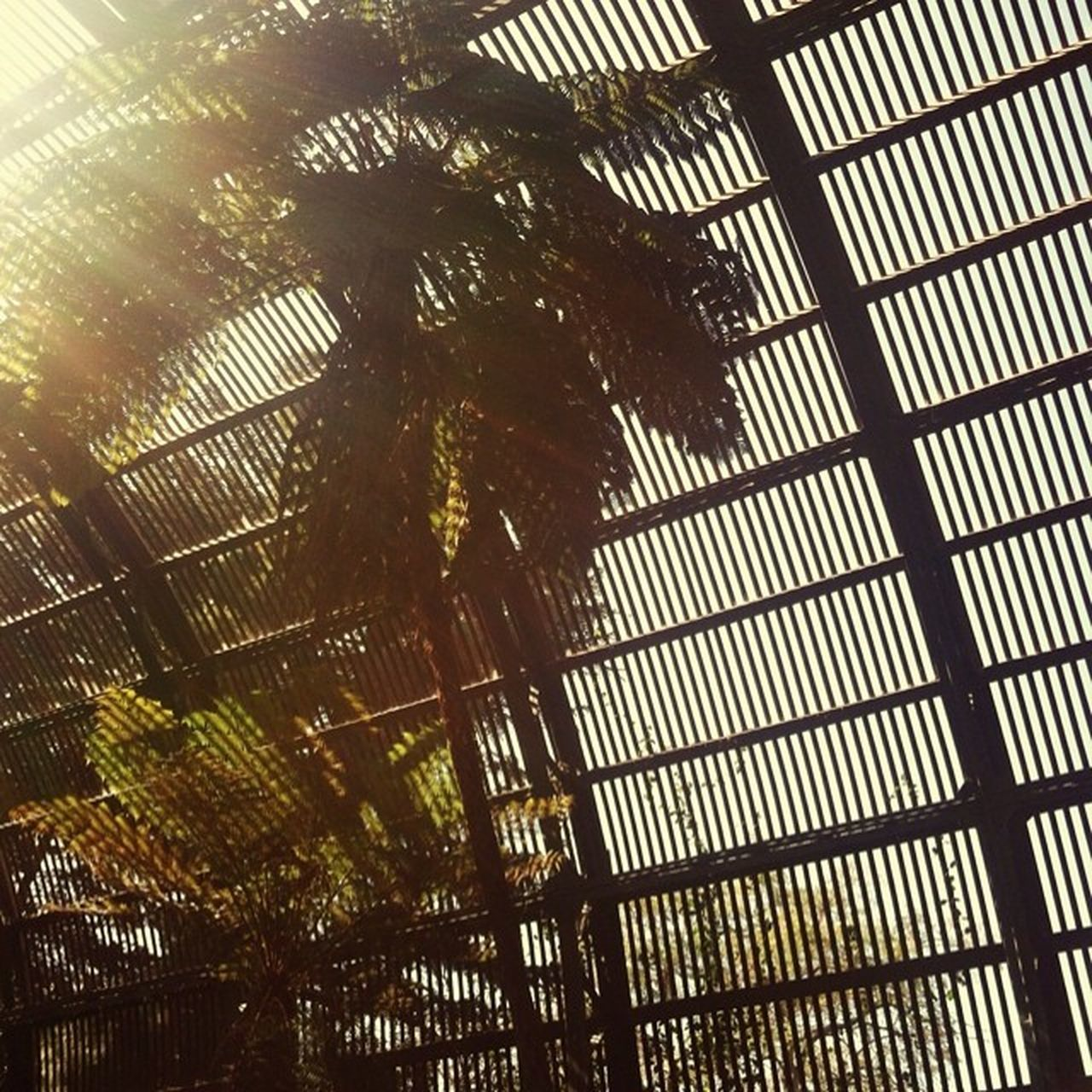 low angle view, indoors, no people, day, close-up, nature, greenhouse