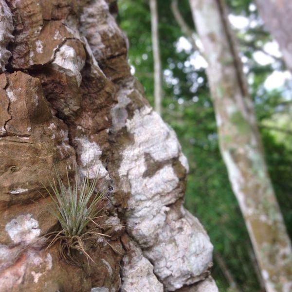 Forest Tree Vegetacion Bosque árbol