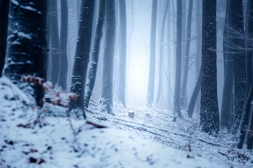 Cold Temperature Snow Winter Forest Tree Nature No People Beauty In Nature Plant Land Frozen Environment Snowing Scenics - Nature Tranquility Day Window Ice WoodLand Outdoors Extreme Weather Blizzard Icicle Climate
