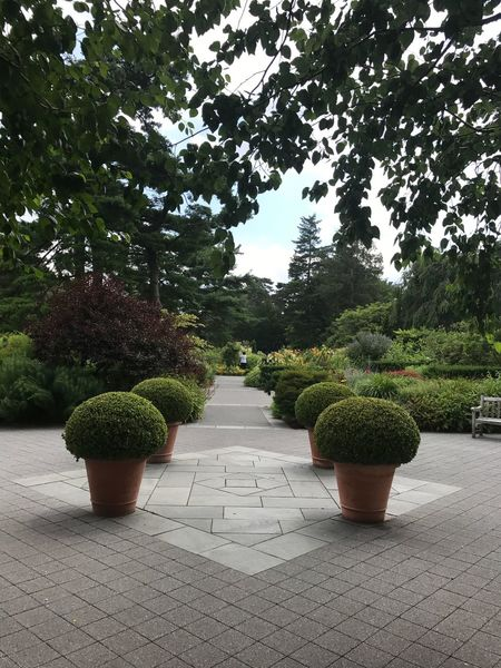 Tree Plant Growth Topiary Green Color The Way Forward Park - Man Made Space No People Day Outdoors Walkway Nature Sky Flower Public Garden
