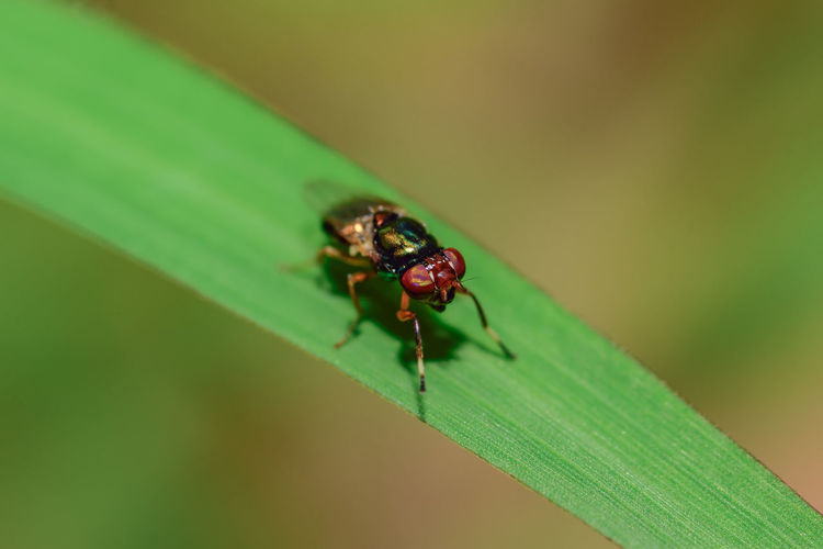 Close-up of fly on grass