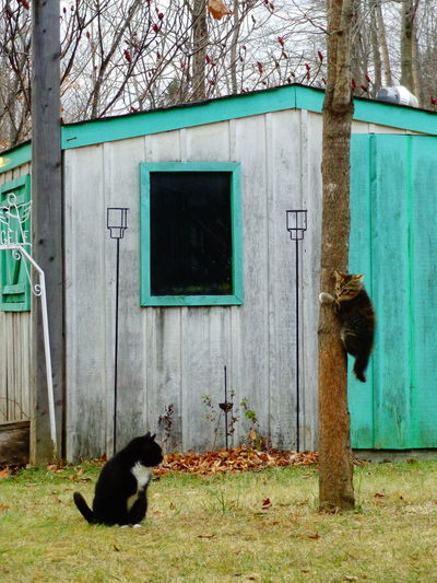 followfriday Building Exterior Built Structure Cats Country Life Head On No People Peek Shack Kitten