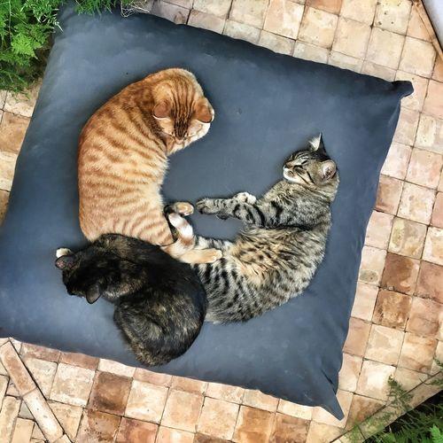Cat Lovers Three Cats Friendly Cats Friendly Pets Cute Cats