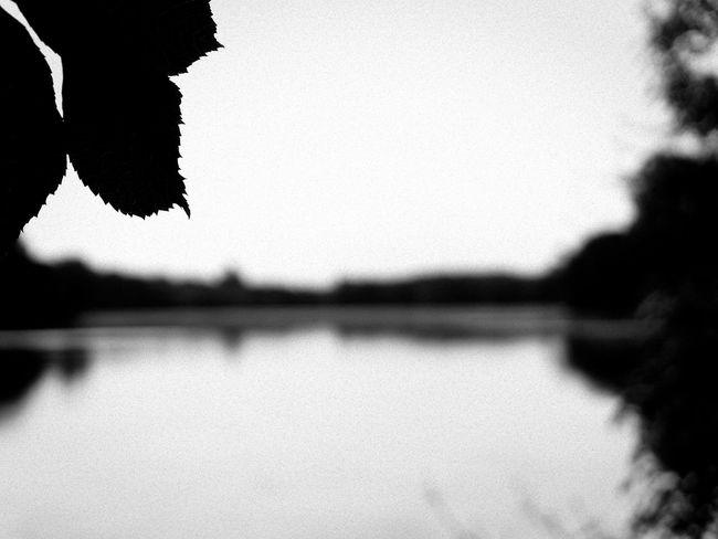 Black & White Black And White Blackandwhite Blackandwhite Photography Claudetheen Focus On Foreground Lake Lake View Tree Unsharp