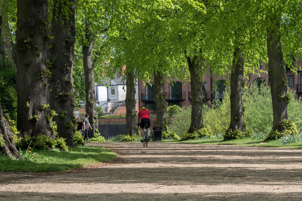 Avenue Of Trees Shrewsbury Trees Bicycle Day Full Length Nature Outdoors Park People Quarry Towpath Tree Tree Trunk