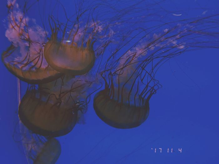 Cold Colors Jellyfish Sea Life Underwater Swimming Water Smooth No People Floating In Water Tentacle Close-up UnderSea Day