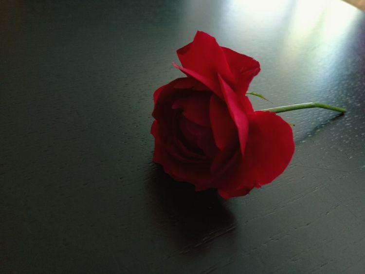 Rose🌹 Rose - Flower Redrose  Suprise Love ♥ Flower Good Morning! Home Sweet Home Home Redroses Flower Photography Roses Flowers