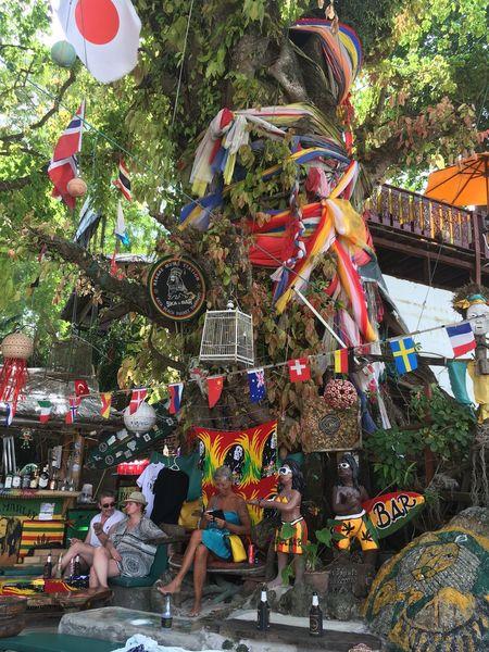 EyeEmNewHere Adapted To The City Tree Multi Colored Outdoors Phuket Phuket,Thailand Kata Beach,Phuket Thailand