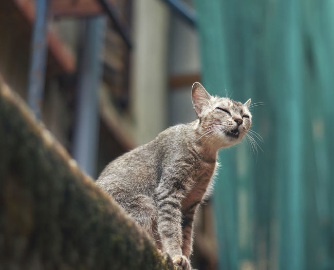 Portrait of a cat sitting on a building wall