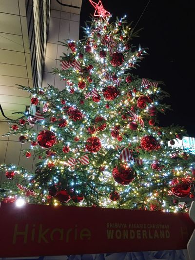 Christmas is coming Chrisrmas Christmas Tree Illumination Shibiya