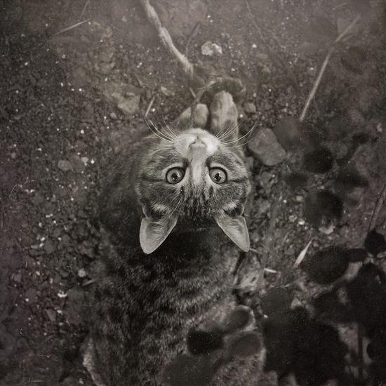 """谁也别想懂我们的世界!meow! Hello World Enjoying Life Pet Photography  "" First Eyeem Photo"