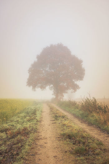 Dirt road amidst field against sky during foggy weather