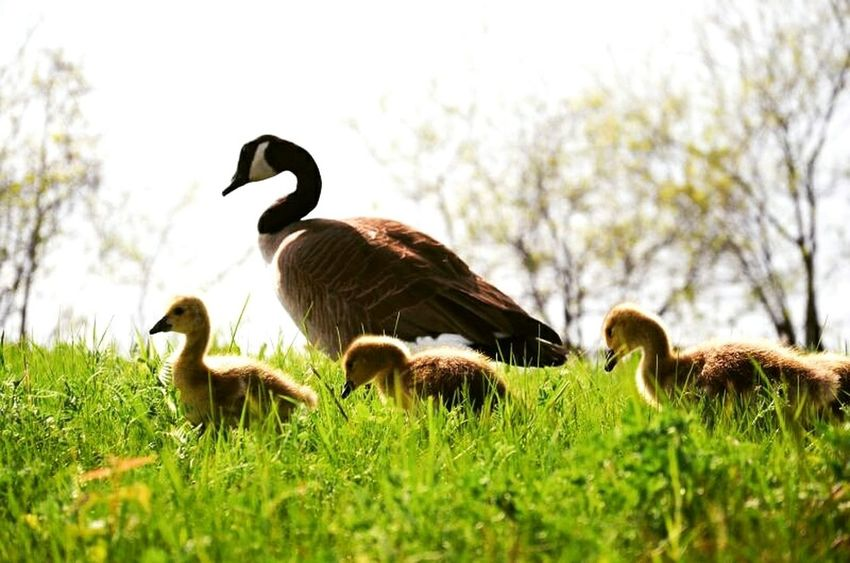 The Essence Of Summer Relaxing Hi! Taking Photos Hanging Out Enjoying Life Summer Summer Views Flower Canada Nikon D7000 Hello World Mom Mother And Son Mother Goose Gooses Family Daylight